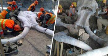 Peste 60 de schelete de mamut au fost descoperite pe locul unui viitor aeroport din Mexic