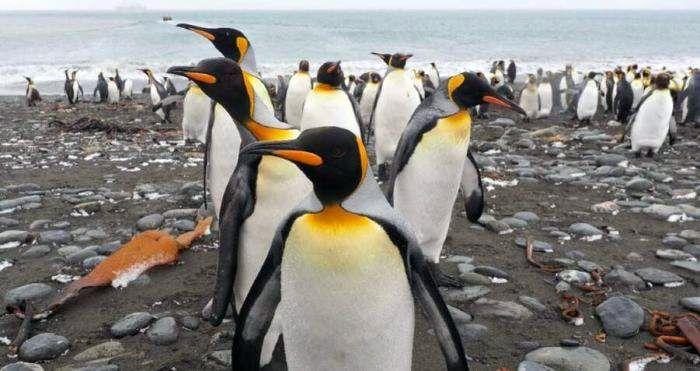 Pinguini pe plaja