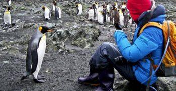 """Pinguinii """"ilarianți"""": Gazul care îi face pe cercetători să o ia razna"""