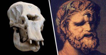 Stau aceste cranii la baza legendelor cu ciclopi, uriașii cu un ochi în frunte?