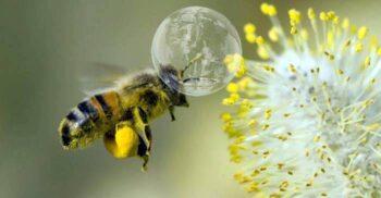 A fost creată drona-albină: polenizează flori folosind un pistol cu baloane