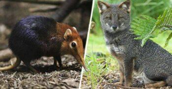 5 animale mai puțin cunoscute, apariții rare în sălbăticie