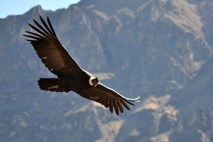 Condor andin 02