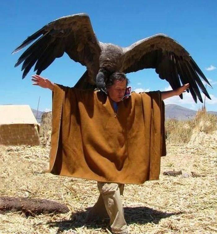 Condor andin