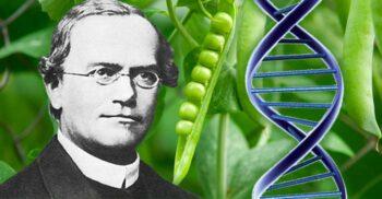 Gregor Mendel, călugărul care a pus bazele geneticii