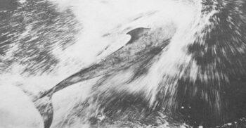 Pelorus Jack, delfinul care a ghidat zeci de nave printr-o strâmtoare periculoasă