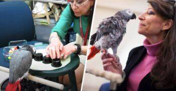 """Un papagal a învins la """"alba-neagra"""" 21 de studenți de la Harvard"""