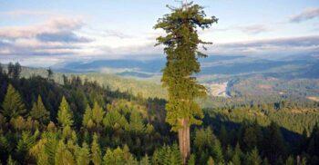 11 lucruri interesante despre copaci, uriașii verzi de lângă noi