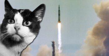3 pisici care au participat la evenimente istorice importante