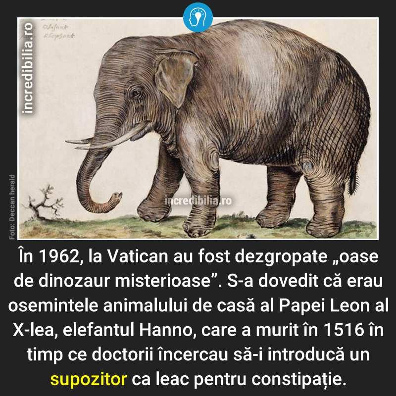 399. elefantul hanno vatican