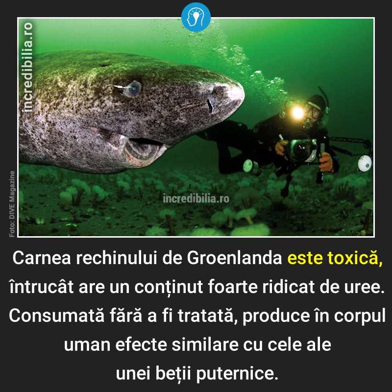 400. rechinul de groenlanda