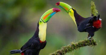 5 păsări cu ciocuri neobișnuite, ce par artificiale