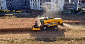 Apartamente cu vedere la ogor: Omul care cultivă grâu între blocuri