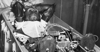 Circ pe orbită: Istoria puțin știută a animalelor trimise de om în cosmos