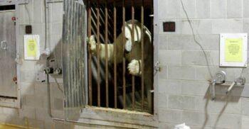 Sentință: O lună de carceră. Singura închisoare pentru urși polari din lume