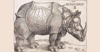 """Rinocerul lui Dürer, un """"fake news"""" viral care a circulat în secolul XVI"""