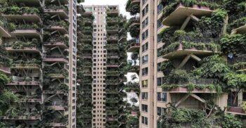 """""""Pădurea verticală"""" din China a devenit un iad urban plin de țânțari"""