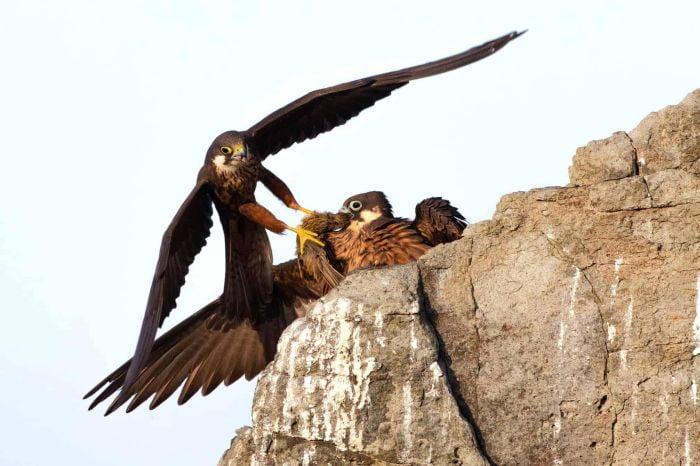 010 Vulturi