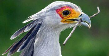 5 animale care își ucid prada prin metode neobișnuite