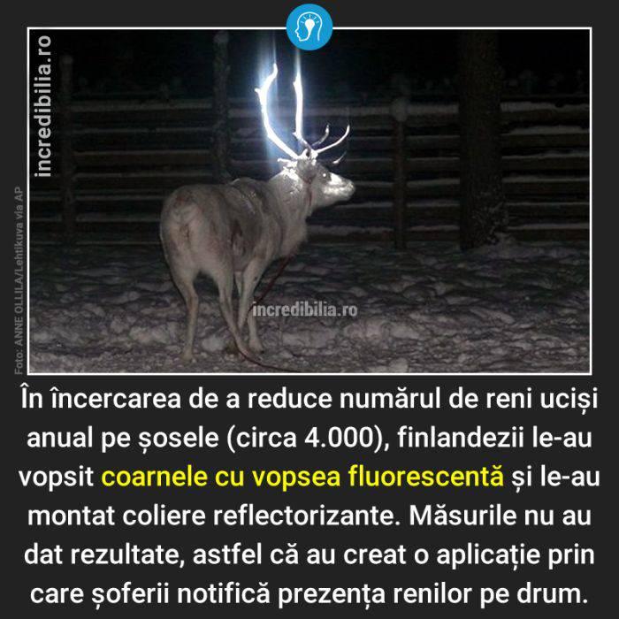 545. reni finlanda vopsea_44_red_compressed