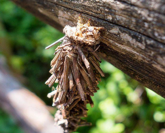 Cabane din lemn 01