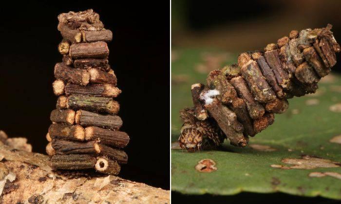 Cabane din lemn 02