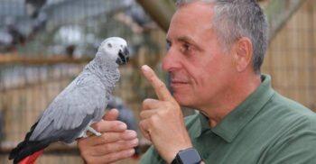 """Cinci papagali au fost """"eliminați"""" de la zoo pentru că înjurau vizitatorii"""