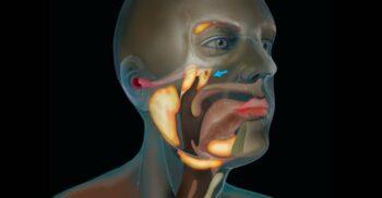 Medicii din Olanda au descoperit întâmplător un nou organ în corpul uman