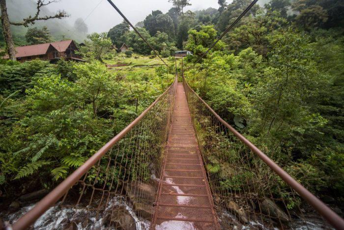 Curiozitati despre Panama - padure