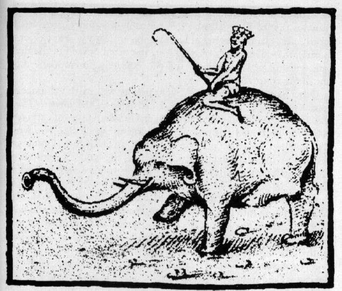 Hanno elefantul 02