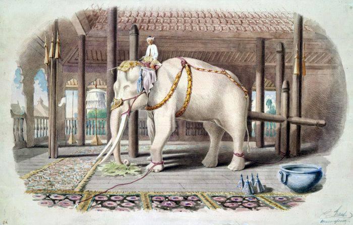 Hanno elefantul