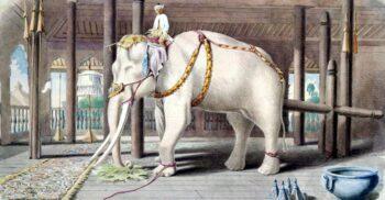 Povestea lui Hanno, elefantul primit drept mită și îngropat la Vatican