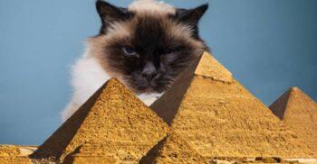 Felinele zeițe: Viețile de huzur ale pisicilor în Egiptul Antic