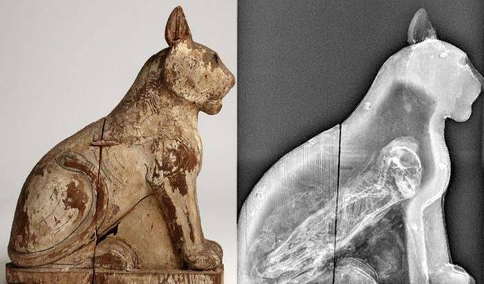 Mumie de pisica