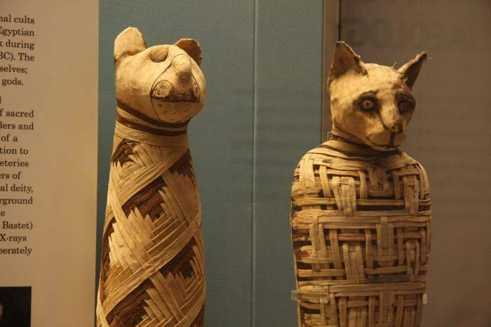 Mumii de animale