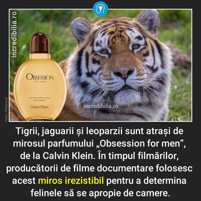 767. feline calvin klein_163_red