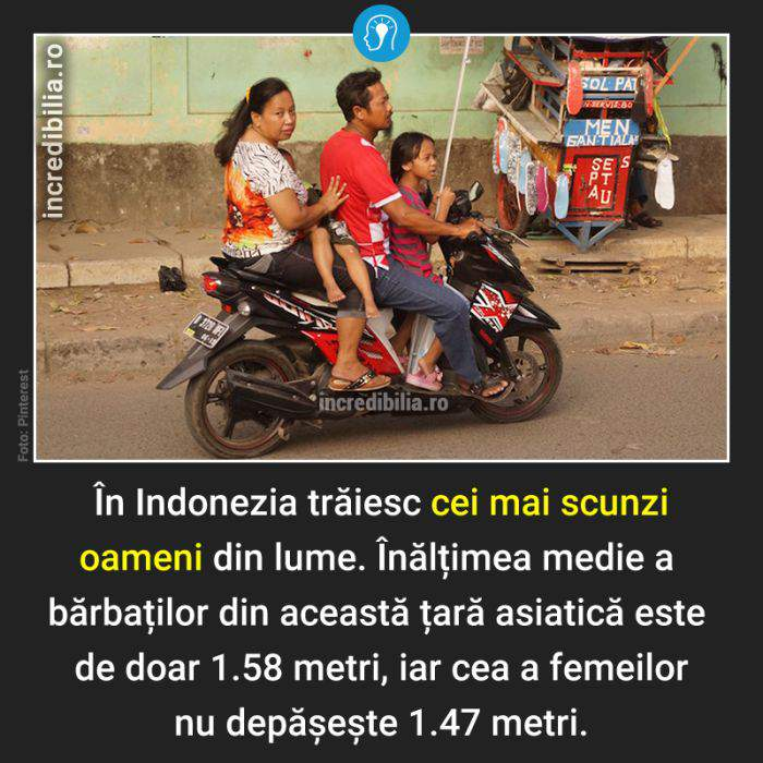 768. indonezieni scunzi_164_red
