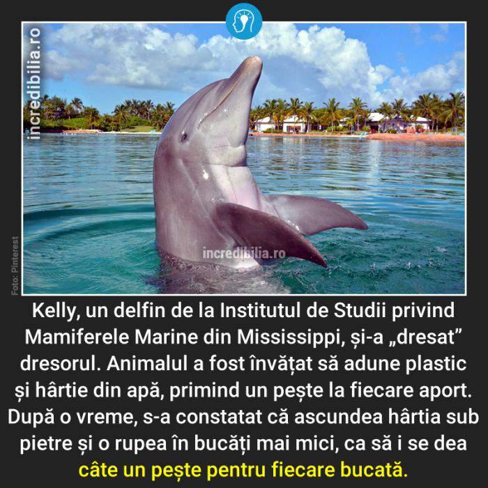 782. delfinul kelly_178_red