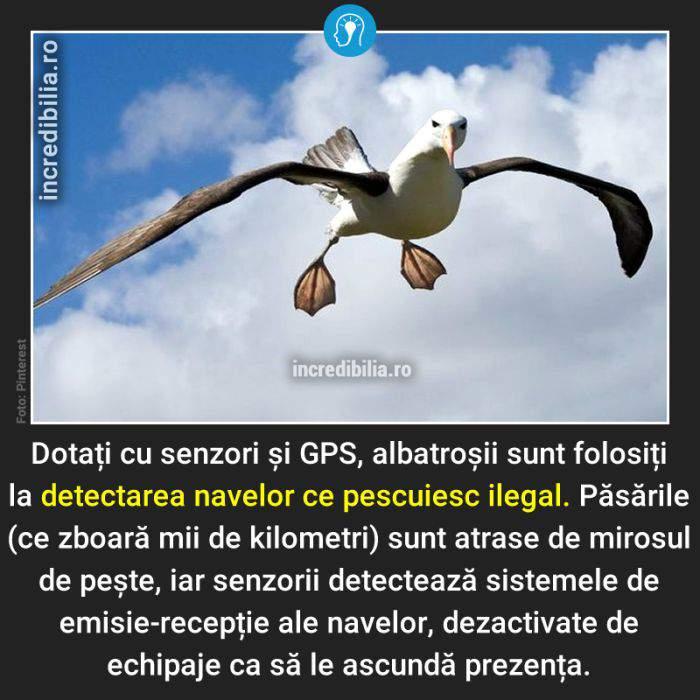 787. albatrosi pescuit ilegal_182_red