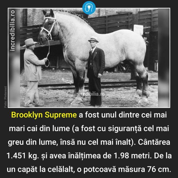 791. brooklyn supreme_186_red