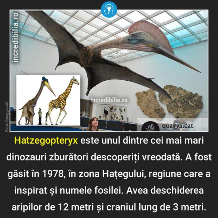 792. hatzegopteryx_187_red