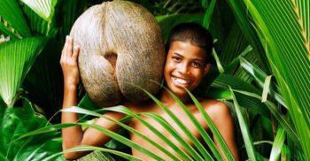 Coco de mer (nuca de cocos de mare), fructul care arată ca un fund de femeie