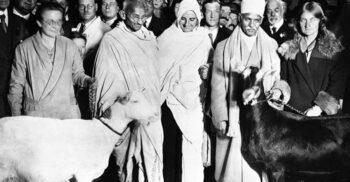 Mahatma Gandhi, activistul vegetarian care lua capra cu el când călătorea