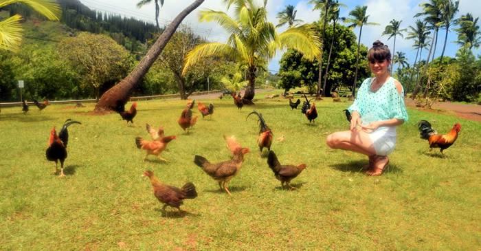 Marele cotet din Hawaii - Insula Kauai paradisul gainilor salbatice