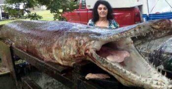 """Peștele aligator, """"bătrânul uriaș"""" pe care oamenii aproape că l-au anihilat"""