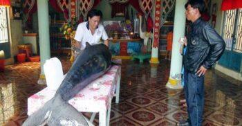 Templele balenelor, lăcașurile de cult în care enoriașii se închină moaște de balenă