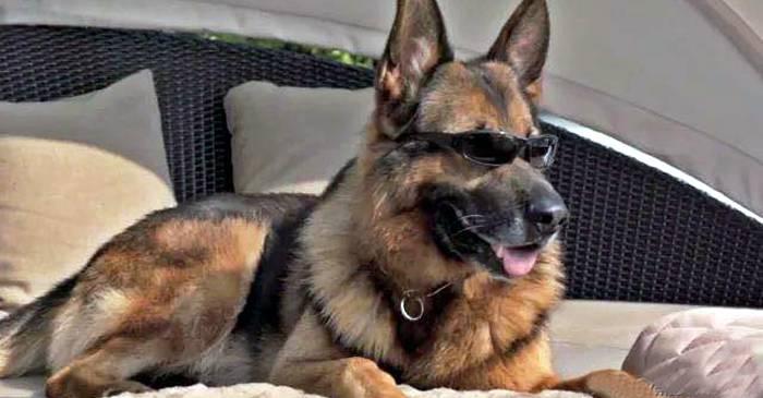 """""""Magnatul"""" Gunther al IV-lea Cea mai bogată dinastie de câini din lume featured_compressed"""