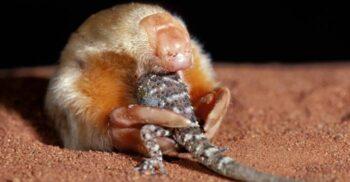 5 dintre cele mai bizare creaturi care trăiesc în Australia