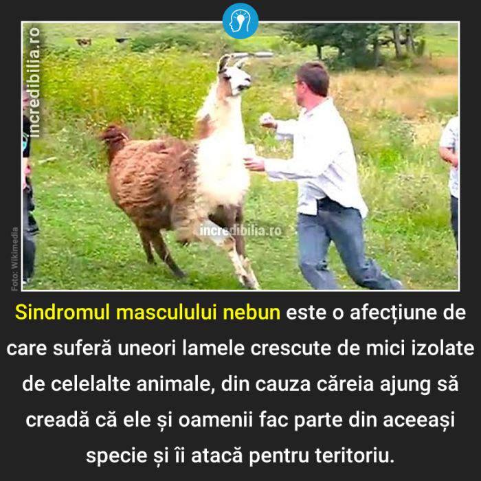 939. sindromul masculului nebun_37_red_compressed