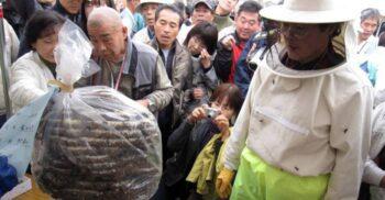 """Festivalul de mâncat viespi, cea mai """"înțepătoare"""" distracție din Japonia"""
